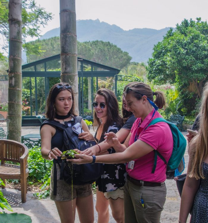 Summer course students examining plants on the Island of Ischia